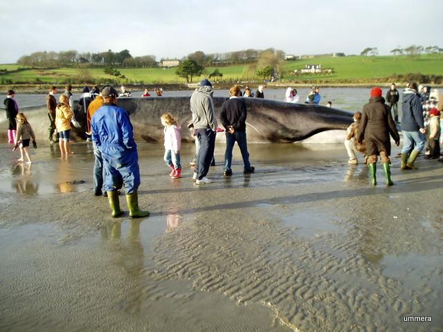 whale-2-15-01-2009-15-34-59